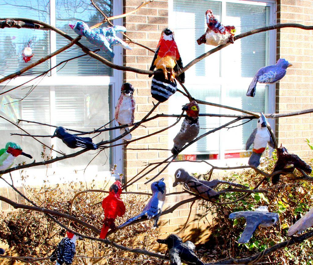 North Carolina Backyard Birds